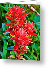 Paintbrush On Highline Trail In Glacier National Park-montana   Greeting Card