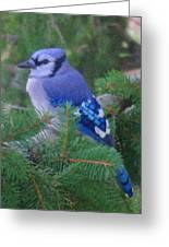 Painted Blue Jay  Greeting Card
