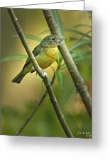 Painted Bunting Female Greeting Card
