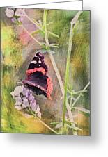 Painted Butterfly Greeting Card