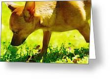 Painted Chihuahua  Greeting Card