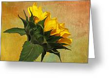 Painted Golden Beauty Greeting Card