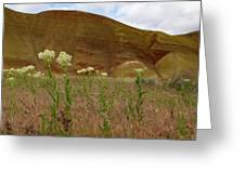 Painted Hills White Wildflowers Greeting Card