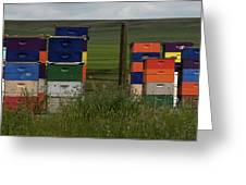 Painted Hives Greeting Card