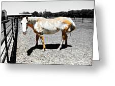 Painted Horse II Greeting Card