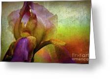 Painted Iris Greeting Card