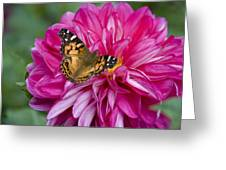 Painted Lady On Dahlia Greeting Card
