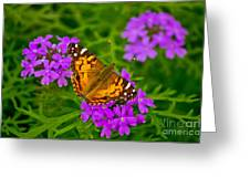 Painted Lady On Purple Verbena Greeting Card