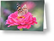 Painted Lady On Red Zinnia 3  Greeting Card