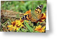 Painted Lady On Zinnia Greeting Card