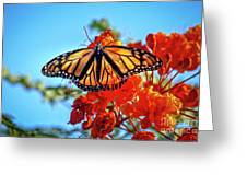 Painted Lady Greeting Card by Robert Bales