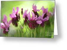 Painted Lavender By Kaye Menner Greeting Card