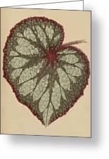Painted Leaf Begonia Greeting Card