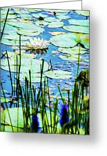 Painted North American White Water Lily Greeting Card