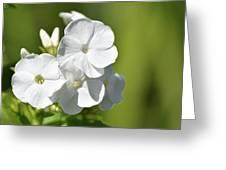 Painted Petals Greeting Card