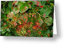 Painted Plants Greeting Card