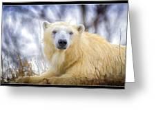 Painted Polar Bear  Greeting Card