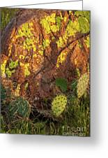 Painted Rock Greeting Card