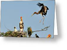 Painted Stork  Greeting Card
