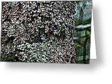 Painted Treebark Woodcut Greeting Card