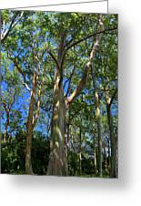 Painted Trees Greeting Card