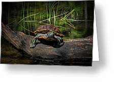Painted Turtle Sunning Itself On A Log Greeting Card