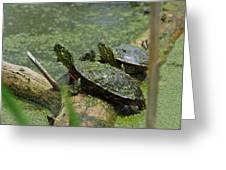 Painted Turtles Greeting Card