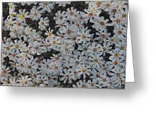 Painted White Daisies Greeting Card