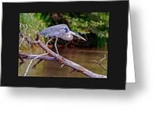 Painting Blue Heron Oak Creek Greeting Card