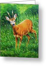 painting of young deer in wild landscape with high grass. Eye contact. Greeting Card