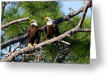 Pair Of American Bald Eagle Greeting Card