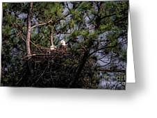 Pair Of Bald Eagles In Nest Greeting Card