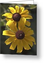 Pair Of Black-eyed Susans Greeting Card