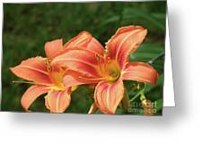 Pair Of Blooming Orange Lilies In A Garden Greeting Card