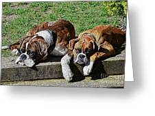 Pair Of Boxers Greeting Card