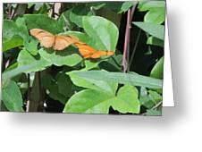 Pair Of Butterflies Greeting Card