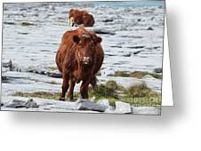 Pair Of Cows Grazing On The Burren In Ireland Greeting Card