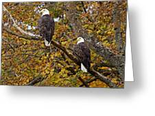 Pair Of Eagles In Autumn Greeting Card