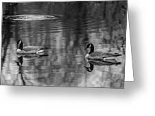 Pair Of Geese, Nisqually National Wildlife Refuge, Washington, 2016 Greeting Card