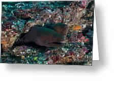 Pair Of Giant Moray Eels In Hole Greeting Card