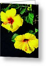 Pair Of Golden Hibiscus In Morning Sun Greeting Card