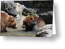 Pair Of Grizzly Bears Wading In A Shallow River Greeting Card