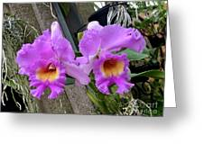 Pretty Purple Orchids Greeting Card