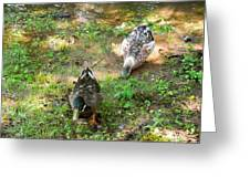 Pair Of Mallard Duck 5 Greeting Card