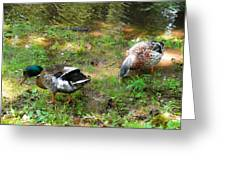Pair Of Mallard Duck 6 Greeting Card