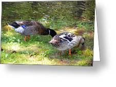 Pair Of Mallard Duck 7 Greeting Card
