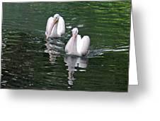 Pair Of Pelicans Greeting Card