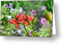Pair Of Red Asiatic Lilies After A Rain Greeting Card