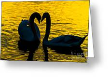 Pair Of Swans Greeting Card