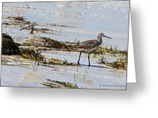 Pair Of Willets Greeting Card